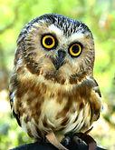 Sophia the owl.jpg