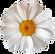 flower sola no back.png