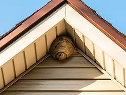Bee nest.