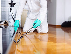 Person performing bed bug removal.