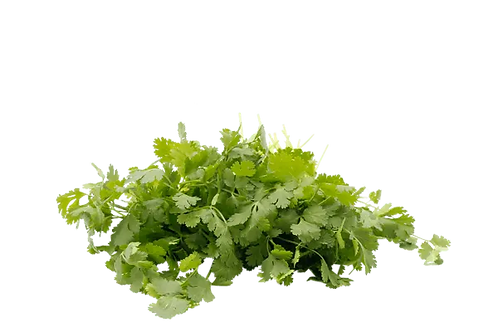AVAILABLE FROM MONDAY ! 100g Fresh Cilantro Premium Quality
