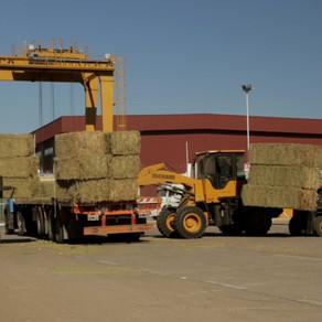 Esperan un fuerte impacto productivo, comercial y ambiental con la exportación de alfalfa