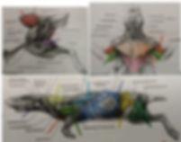 Anatomy_09.jpg
