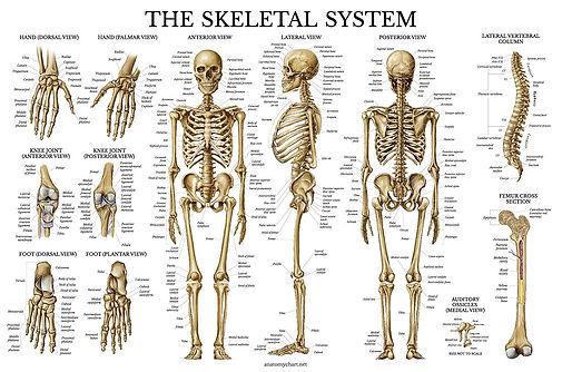 Anatomy_04.jpg