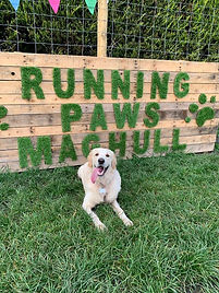 Running Paws Maghull Secure dog field