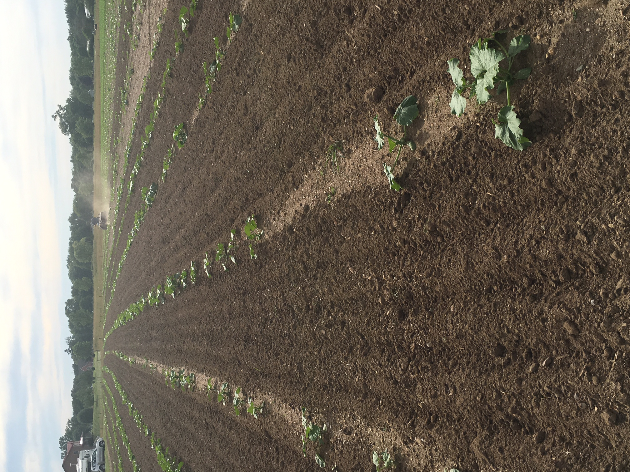 Cultivated Rows