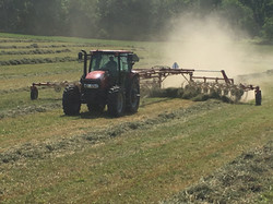 Windrowing the Hay
