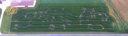 Roberts Farms Corn Maze