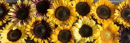 sunflowers_bn.jpg