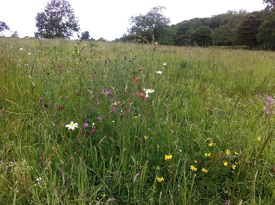 Stokehill, Stokehill conservation, biodiversity, Somerset wildflower meadow