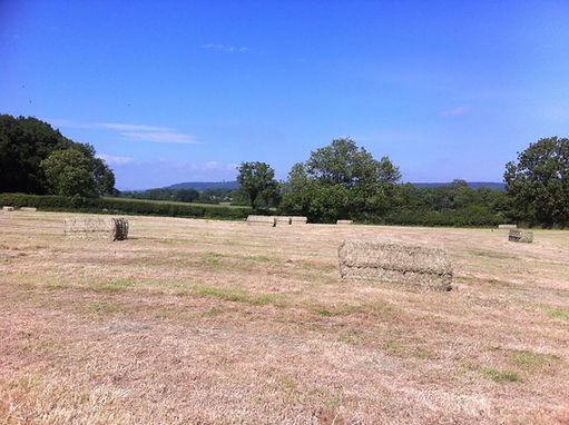 Stokehill hay meadow