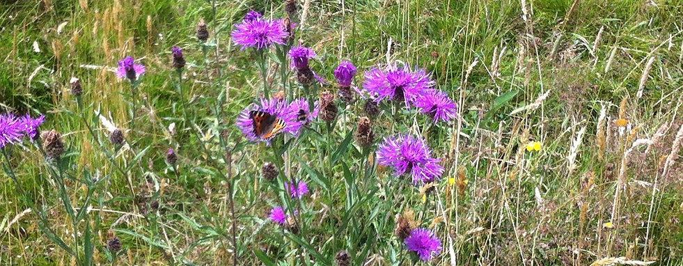 Stokehill conservation, biodiversity, Somerset