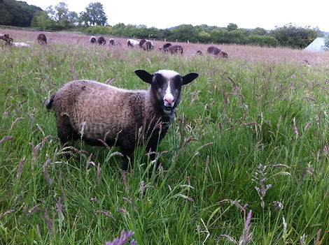Stokehill Education and Training, farming at Stokehill