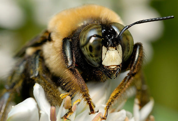 bee-up-close.jpg