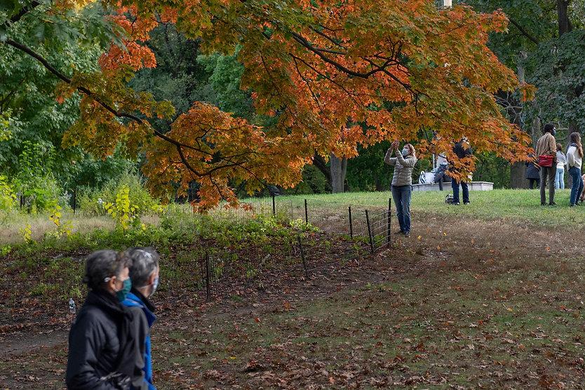 best-fall-spots-nyc.jpg