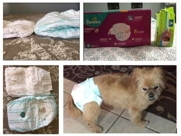 O IS FOR OLD DOG (I prefer mature dog): Dog Diapers or Pampers®?