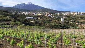 Es el momento de aplicar los preparados Biodinámicos al viñedo