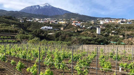 It is time to apply Biodynamic preparations to the vineyard