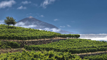 Canarian wines, the rebirth of the volcanic character