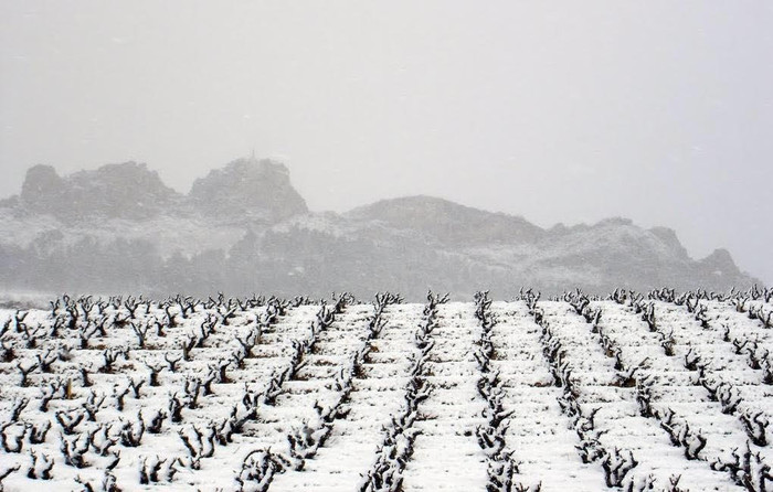 ¡Viñas nevadas y alineadas!