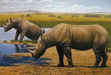 Stephanorhinus-Rhino.jpg