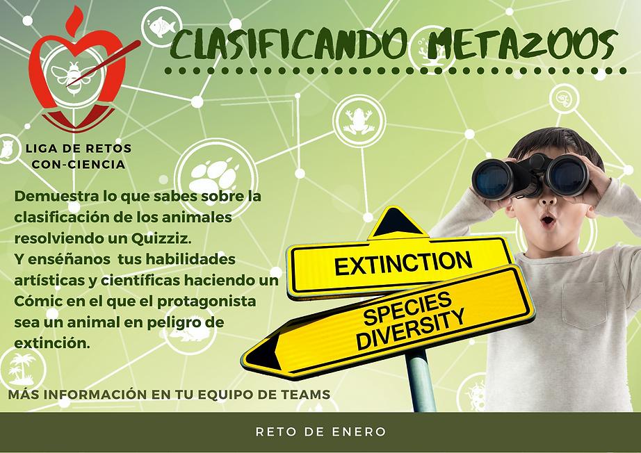 Clasificando metazoos.png