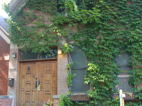 Ivy Covered Homes: Dream or Disaster?