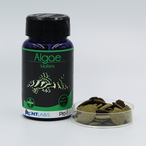 NT Labs Algae Wafers 40g