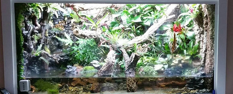Aquariums and Reptile Terrariums cutom made & installed