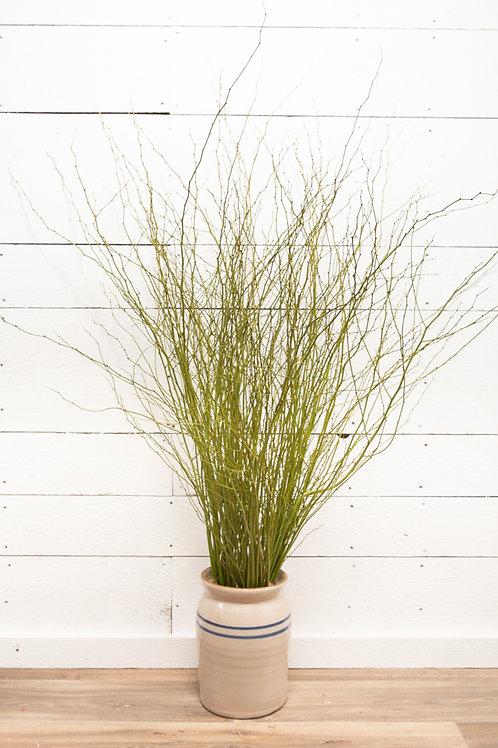 Natural Kerria Twig Bundle
