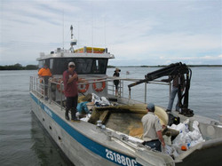 Spoonbill Assists