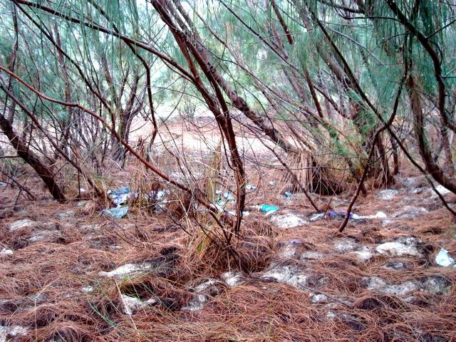 The Pin Islands Rubbish 1