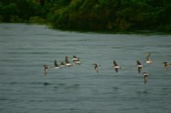 Moreton Bird Life