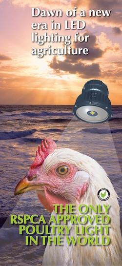 BANNER ART Chicken