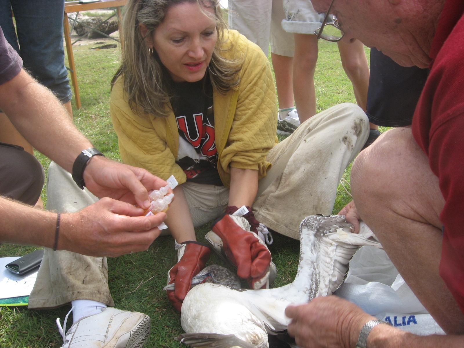 Seabird Rescue 2011 2