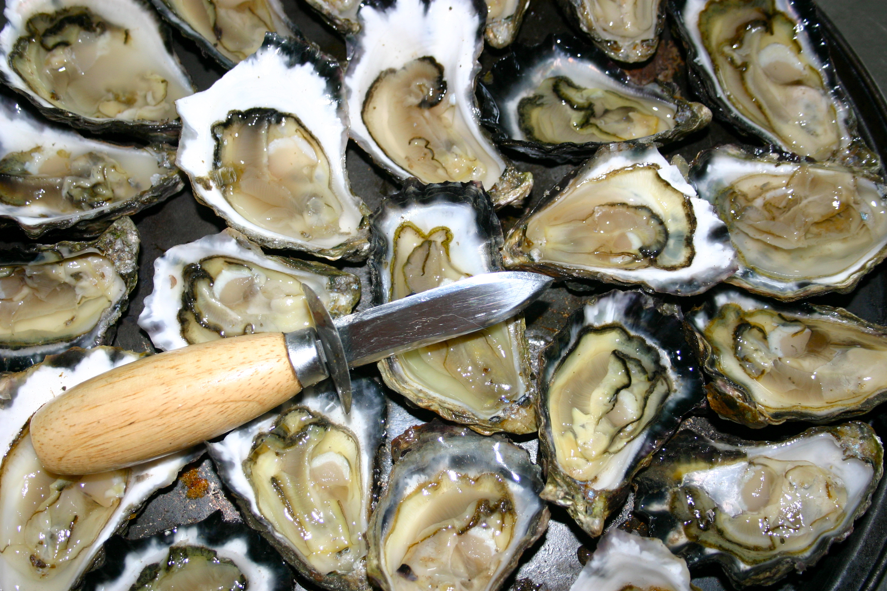 Oyster background