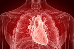 Jak COVID-19 atakuje serce?