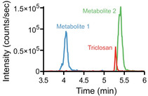 Widely used antimicrobial triclosan induces high levels of antibiotic tolerance in vitro and reduces