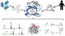 New in ACS Chemical Biology: Whole protein mass spectrometry catches human siderocalin binding an E.