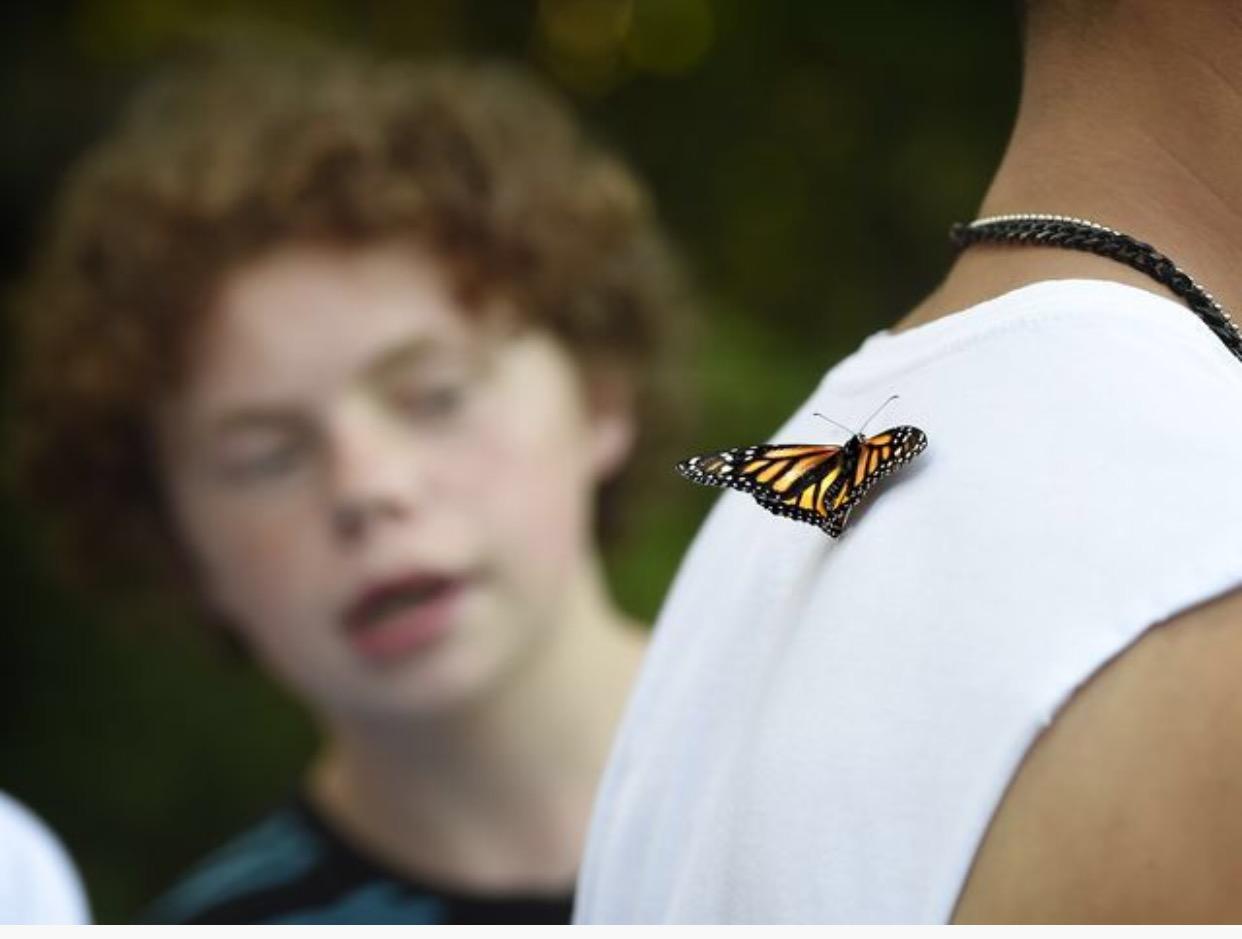 Butterfly on Davids shirt