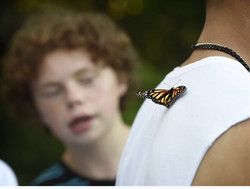 Butterfly on Davids shirt