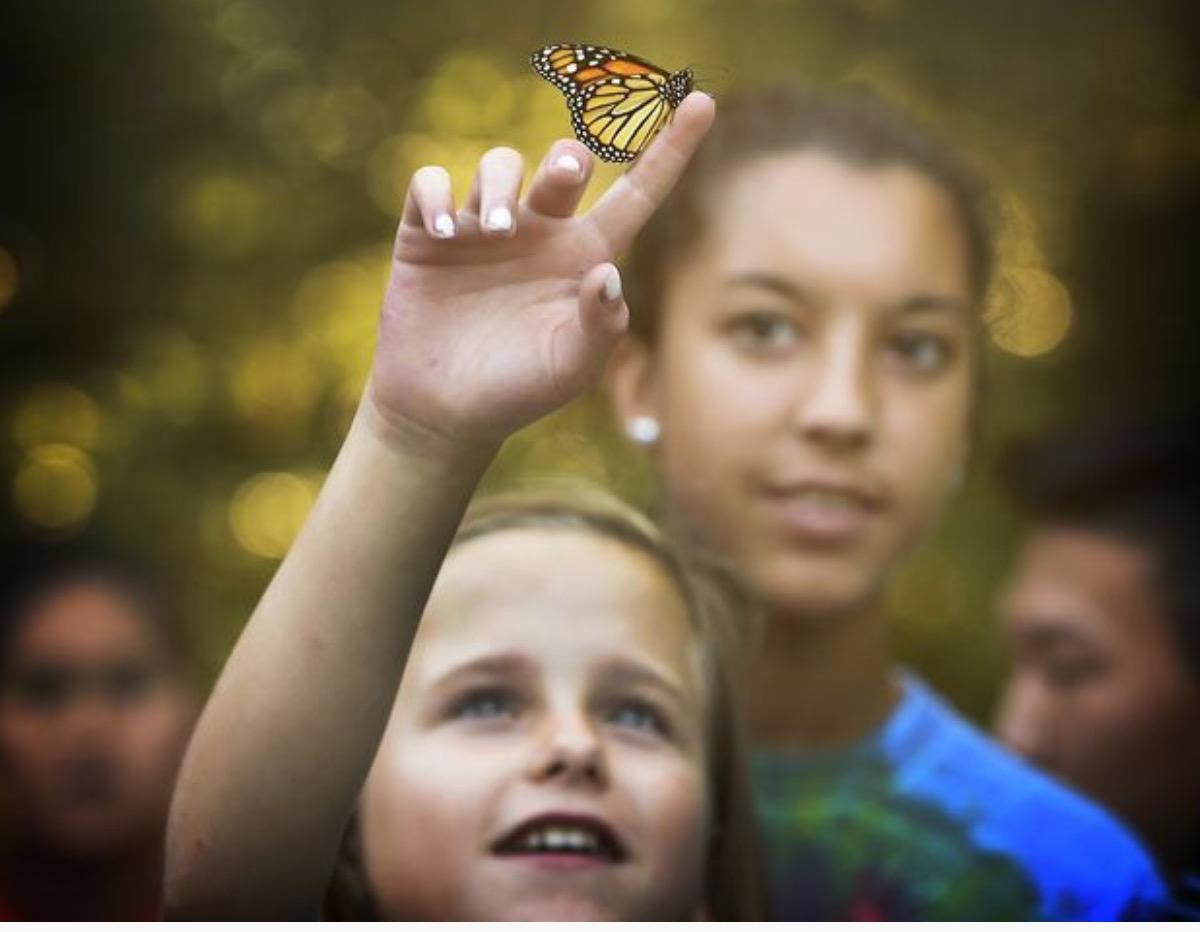 Hannah Butterfly