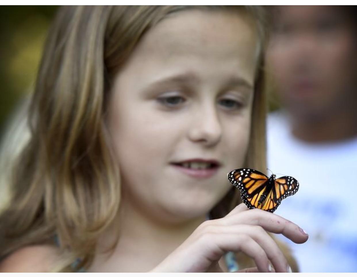 Hannah Butterfly 2