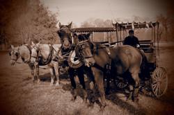 Zámecký park - koně