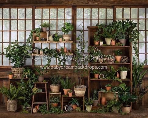 Gorgeous Green House 8x10