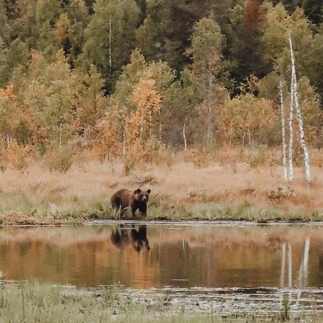 de Big 5 van Fins Lapland