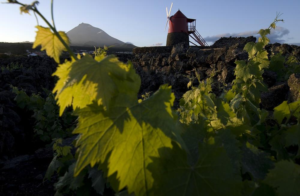 Portugese-wijnregios