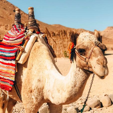 5 x de leukste dingen om te doen in El Gouna, Egypte