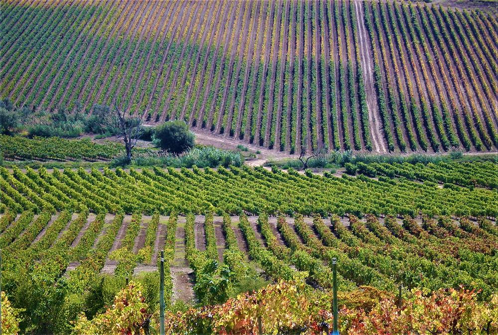 wijnregio-van-portugal