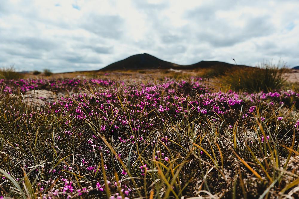 natuur-activiteiten-Cairngorms-National-Park-Schotland